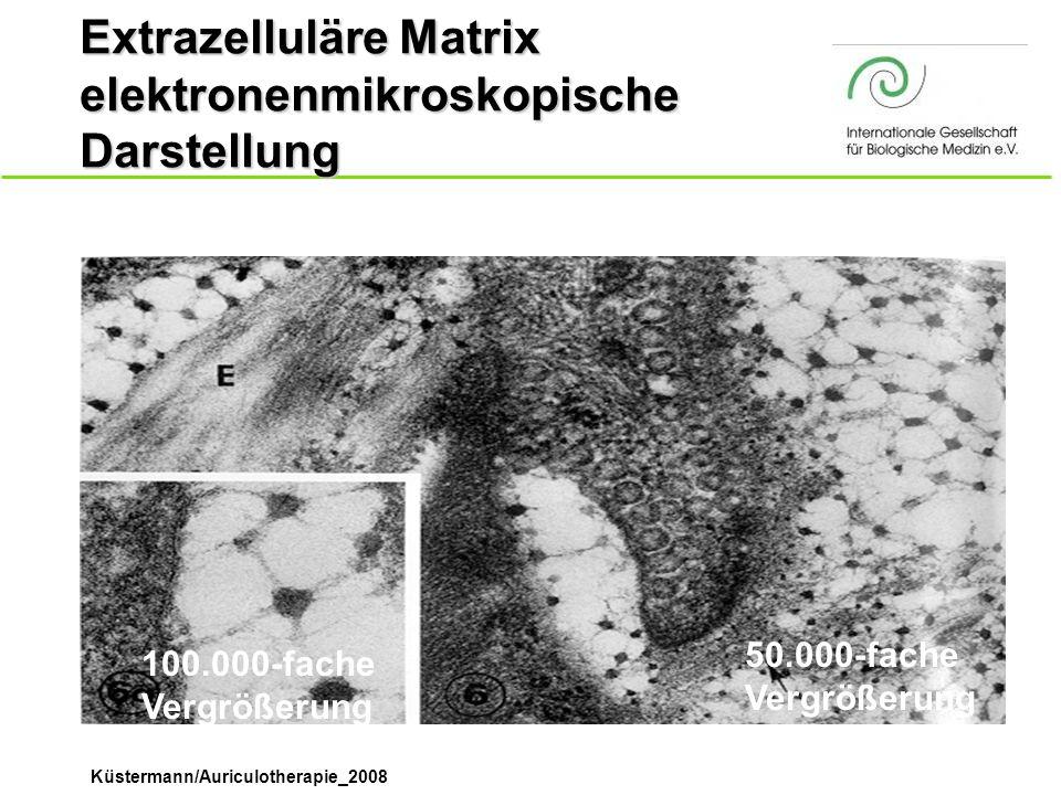 Küstermann/Auriculotherapie_2008 Extrazelluläre Matrix elektronenmikroskopische Darstellung 100.000-fache Vergrößerung 50.000-fache Vergrößerung