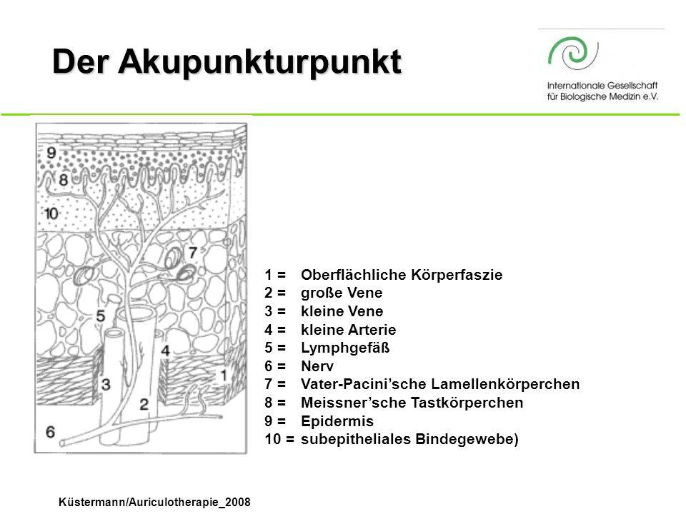 Küstermann/Auriculotherapie_2008 Der Akupunkturpunkt 1 =Oberflächliche Körperfaszie 2 =große Vene 3 =kleine Vene 4 =kleine Arterie 5 =Lymphgefäß 6 =Ne