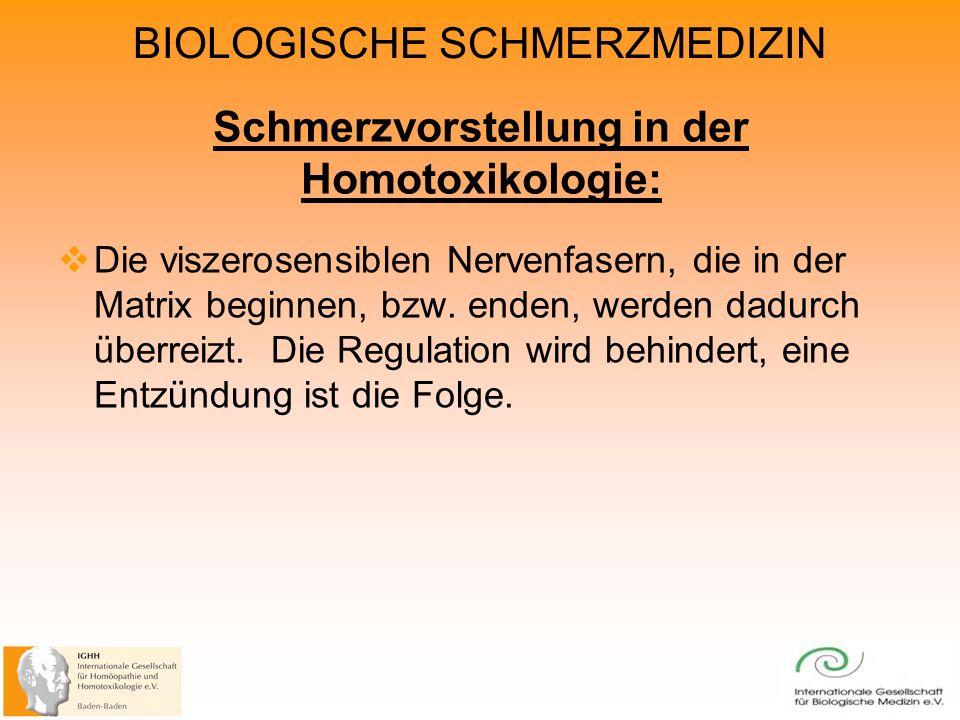 BIOLOGISCHE SCHMERZMEDIZIN Schmerzvorstellung in der Homotoxikologie: Die viszerosensiblen Nervenfasern, die in der Matrix beginnen, bzw.
