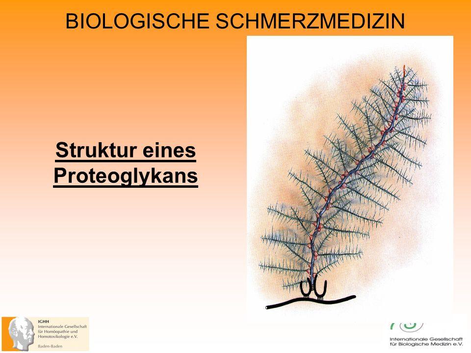 BIOLOGISCHE SCHMERZMEDIZIN Struktur eines Proteoglykans