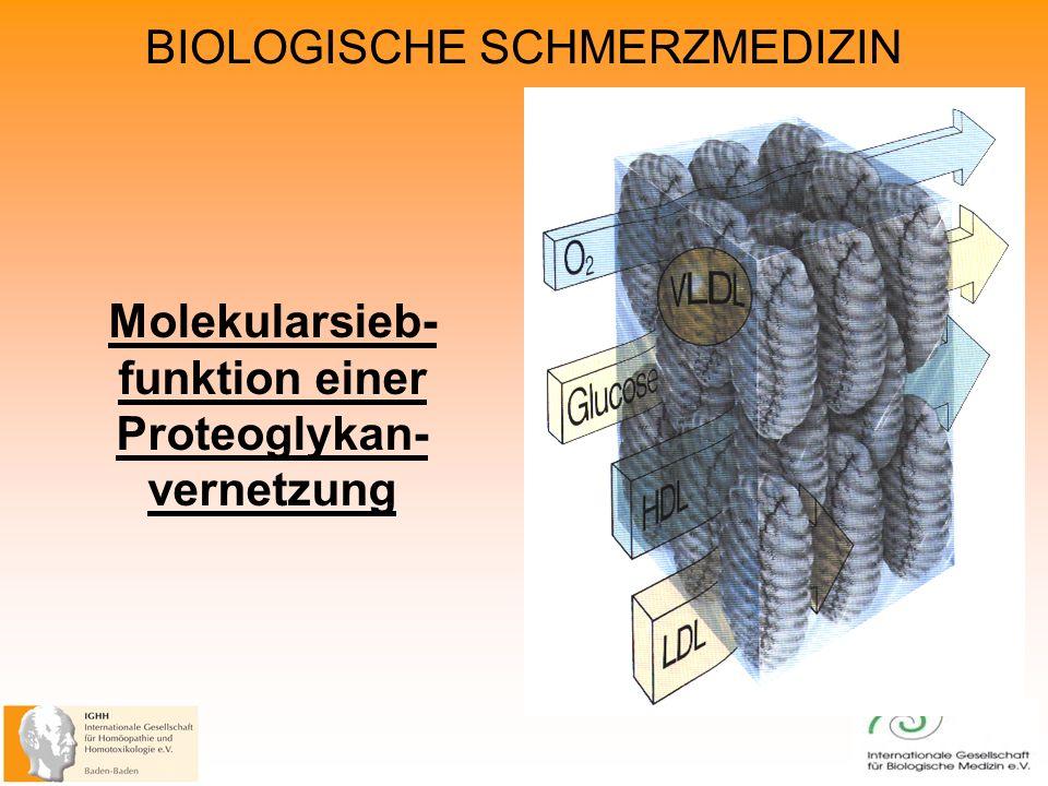 BIOLOGISCHE SCHMERZMEDIZIN Molekularsieb- funktion einer Proteoglykan- vernetzung