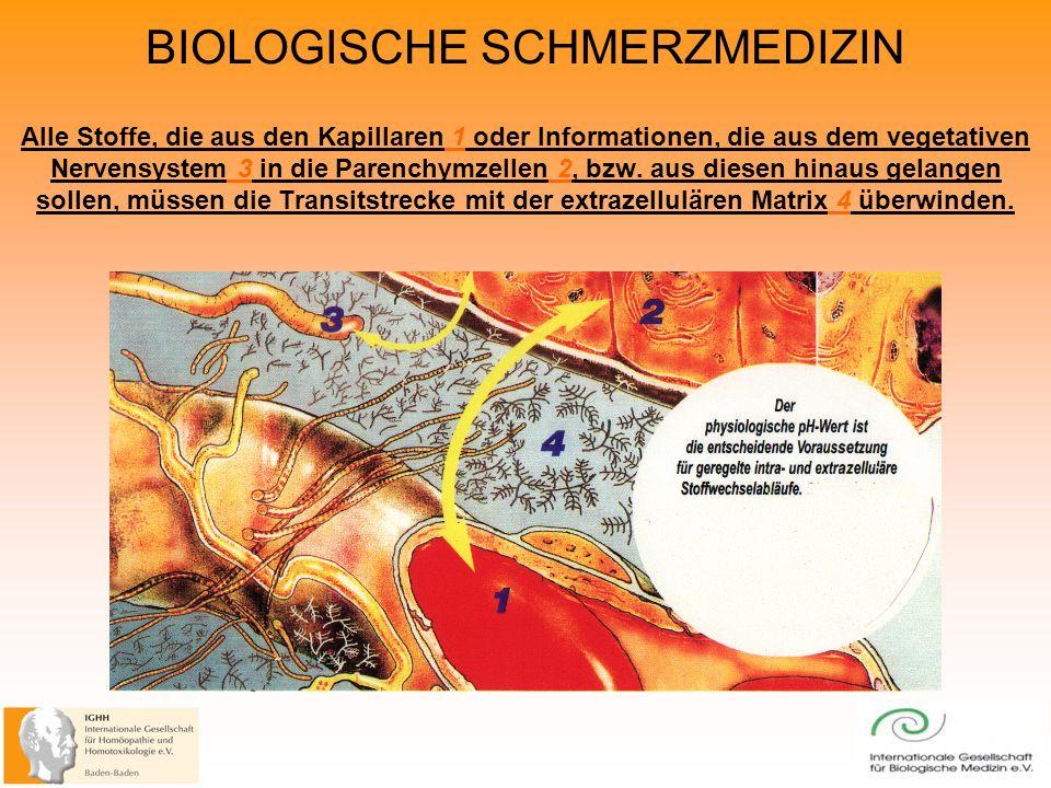 BIOLOGISCHE SCHMERZMEDIZIN Alle Stoffe, die aus den Kapillaren 1 oder Informationen, die aus dem vegetativen Nervensystem 3 in die Parenchymzellen 2, bzw.