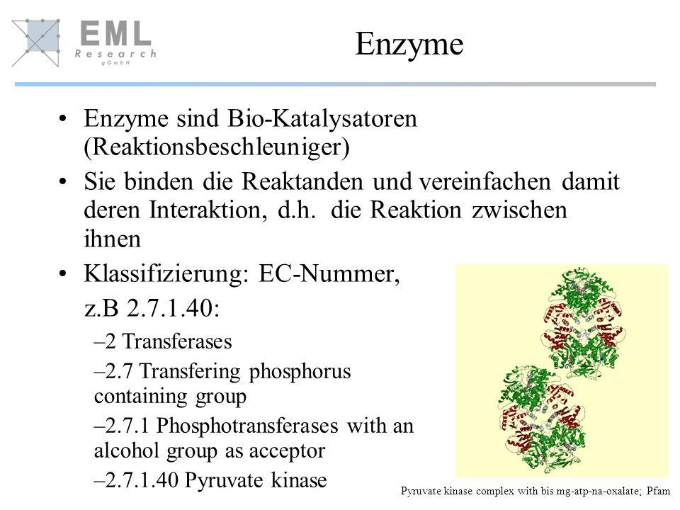 Enzyme Enzyme sind Bio-Katalysatoren (Reaktionsbeschleuniger) Sie binden die Reaktanden und vereinfachen damit deren Interaktion, d.h. die Reaktion zw