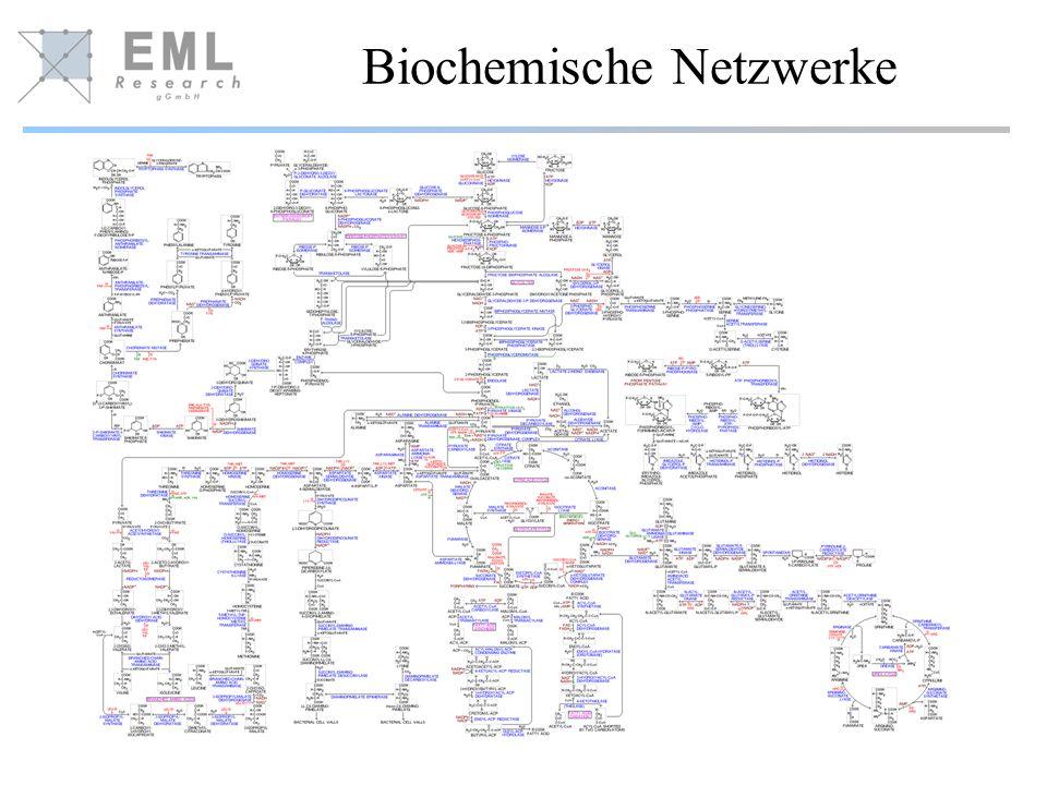 Biochemische Netzwerke