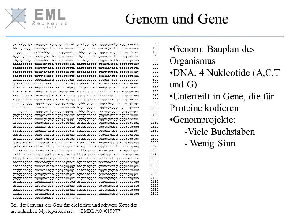 Genom und Gene gacaaggtga caggggacag gtgctctcat gcatggctga tgggaggatg aggtaaaatc 60 ttcagcaggc catttgacta tcaatattaa aaagccctaa aacacgcata cccaaatacg