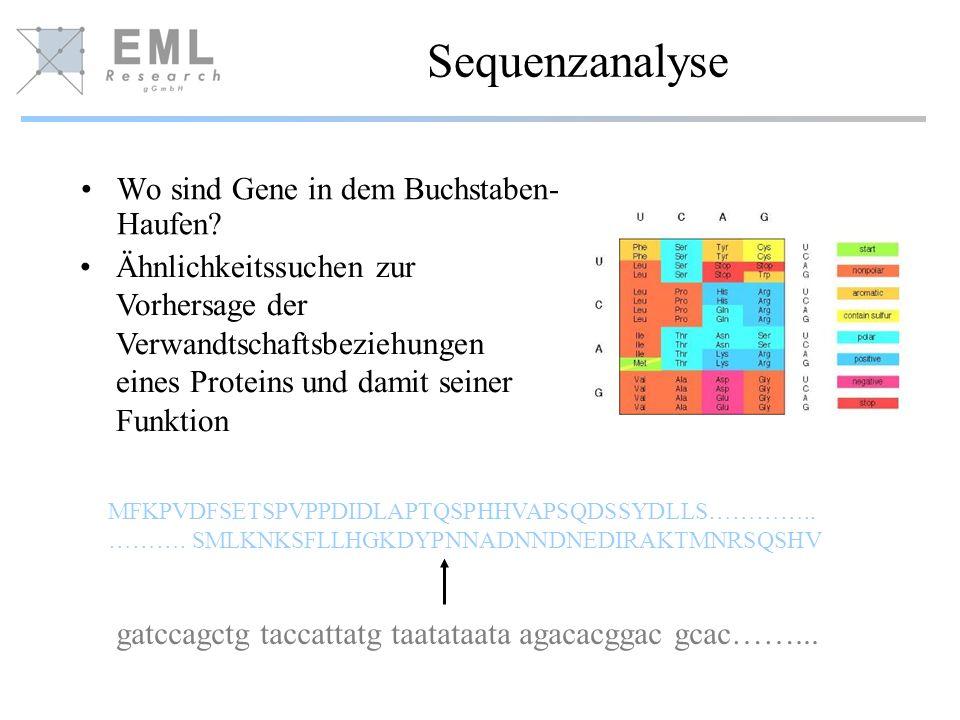 Sequenzanalyse Wo sind Gene in dem Buchstaben- Haufen? gatccagctg taccattatg taatataata agacacggac gcac……... MFKPVDFSETSPVPPDIDLAPTQSPHHVAPSQDSSYDLLS…