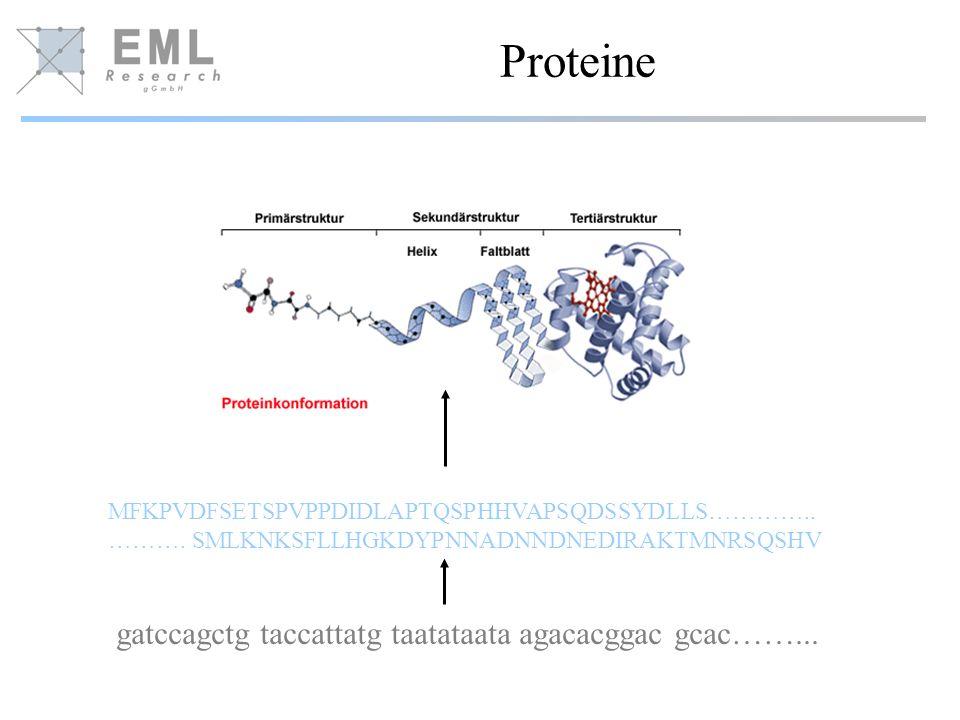 Proteine MFKPVDFSETSPVPPDIDLAPTQSPHHVAPSQDSSYDLLS………….. ………. SMLKNKSFLLHGKDYPNNADNNDNEDIRAKTMNRSQSHV gatccagctg taccattatg taatataata agacacggac gcac…