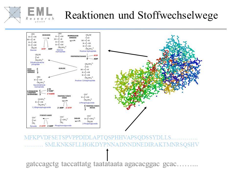 Reaktionen und Stoffwechselwege MFKPVDFSETSPVPPDIDLAPTQSPHHVAPSQDSSYDLLS…………..