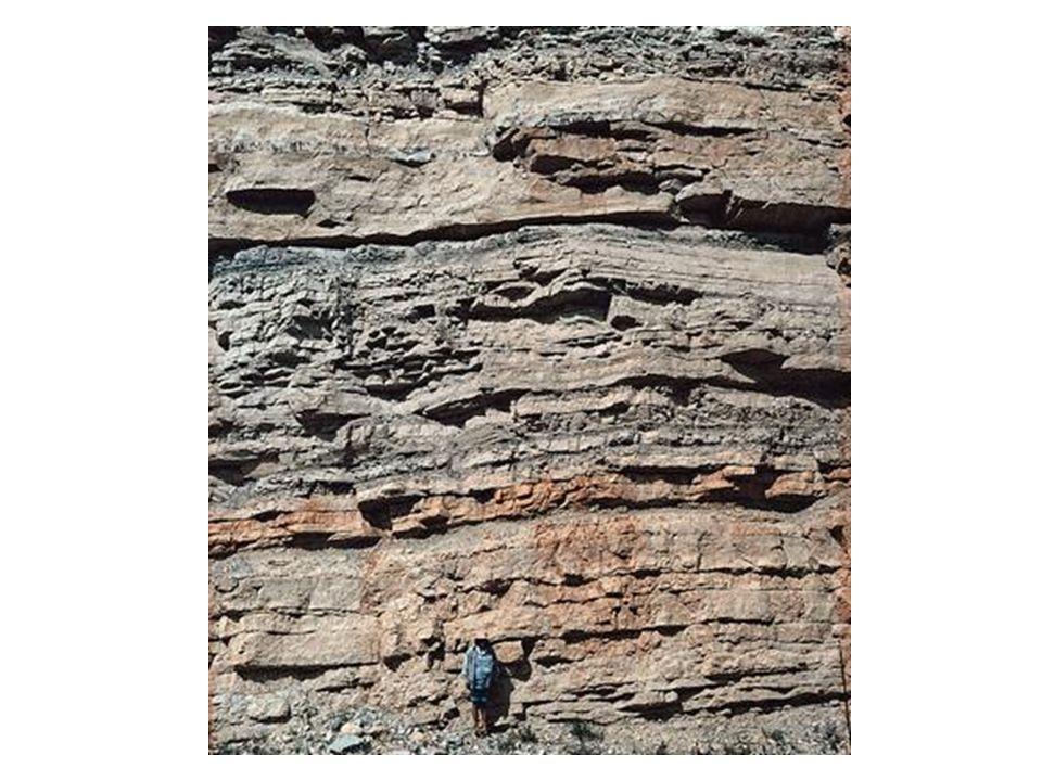 Fossilien Hunsrück- schiefer Mitteldevon Kelchplatten Mitteldevon Gerolstein Aufgeschlagener Kelch Unterdevon aufgerollte Stiele Unterdevon ein ganzer Kelch Mitteldevon, Eifel Kelch und Arme Oberdevon, Marokko