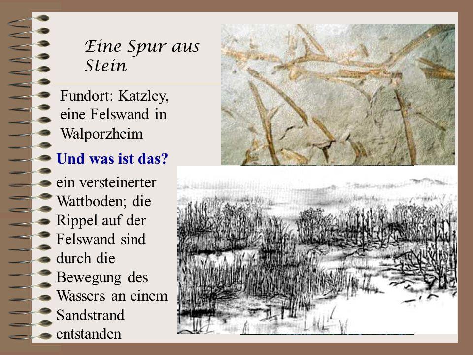 Eine Spur aus Stein Fundort: Katzley, eine Felswand in Walporzheim Und was ist das? ein versteinerter Wattboden; die Rippel auf der Felswand sind durc