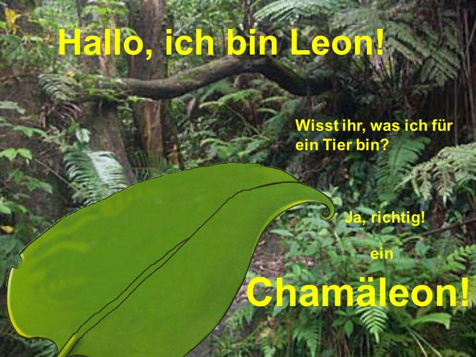 Hallo, ich bin Leon! Wisst ihr, was ich für ein Tier bin? Ja, richtig! ein Chamäleon!
