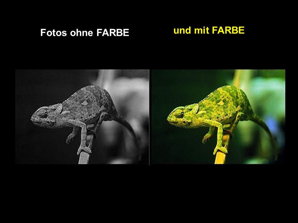 Fotos ohne FARBE und mit FARBE