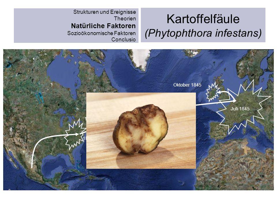Strukturen und Ereignisse Theorien Natürliche Faktoren Sozioökonomische Faktoren Conclusio Kartoffelfäule (Phytophthora infestans) 1843 Juli 1845 1844
