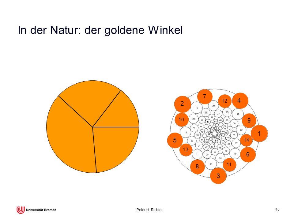 Peter H. Richter 10 In der Natur: der goldene Winkel 9 8 4 3 2 1 76 5 14 12 11 10 13