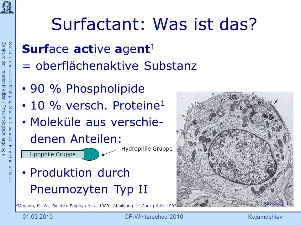 Kujumdshiev Klinikum der Johann Wolfgang Goethe-Universität Frankfurt am MainZentrum der Inneren Medizin / Pneumologie/Allergologie CF-Winterschool 201001.03.2010 Surfactant: Wo .