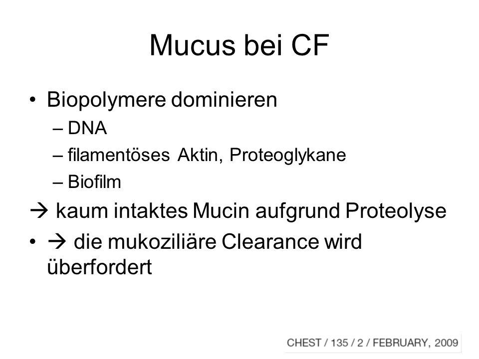 Mucus bei CF Biopolymere dominieren –DNA –filamentöses Aktin, Proteoglykane –Biofilm kaum intaktes Mucin aufgrund Proteolyse die mukoziliäre Clearance