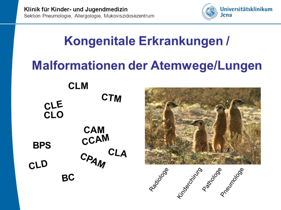 Klinik für Kinder- und Jugendmedizin Sektion Pneumologie, Allergologie, Mukoviszidosezentrum Cystisch Adenomatoide Malformation (CAM) Hamartöse Fehlbildung terminaler respiratorischen Strukturen - ohne Knorpel - statt der Sacculi (Defizit an Alveolen) -> zystische und solide Strukturen mit bronchiolären Elementen Bronchiolenproliferation terminale Bronchiolen aufgeweitet wall of the cyst is lined by cuboidal and pseudostratified, respiratory-like epithelium (hematoxylin and eosin, 200×) Morelli et al.