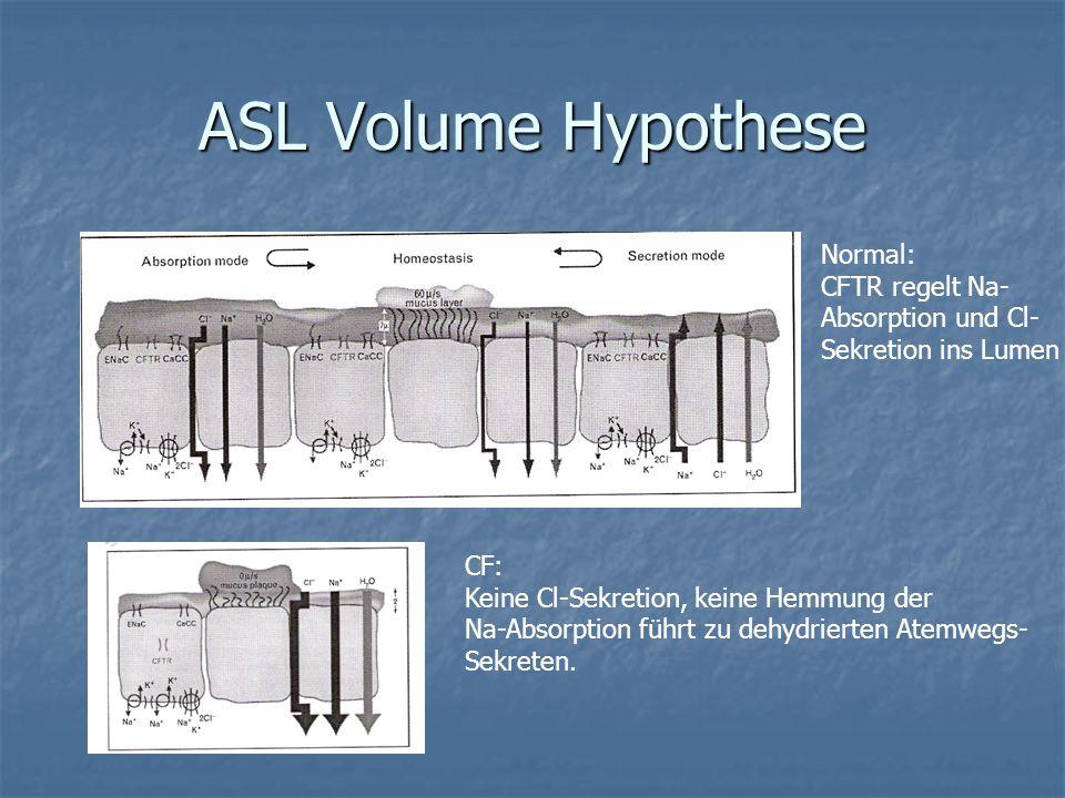ASL Volume Hypothese Normal: CFTR regelt Na- Absorption und Cl- Sekretion ins Lumen CF: Keine Cl-Sekretion, keine Hemmung der Na-Absorption führt zu d