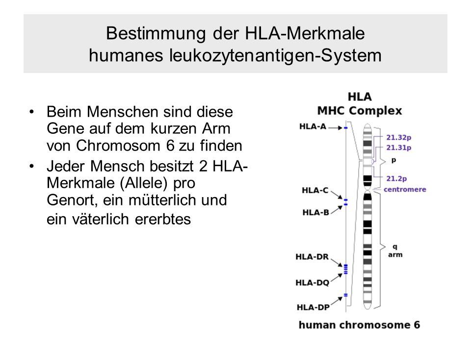 Bestimmung der HLA-Merkmale humanes leukozytenantigen-System Beim Menschen sind diese Gene auf dem kurzen Arm von Chromosom 6 zu finden Jeder Mensch besitzt 2 HLA- Merkmale (Allele) pro Genort, ein mütterlich und ein väterlich ererbtes
