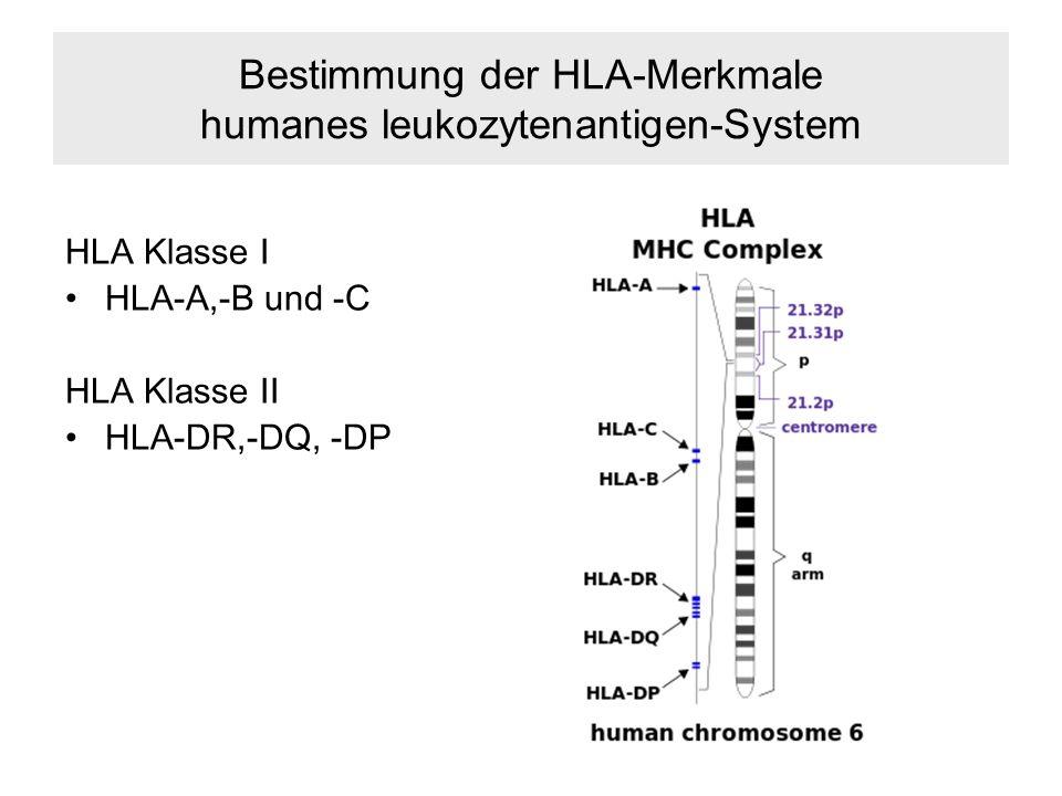 Bestimmung der HLA-Merkmale humanes leukozytenantigen-System HLA Klasse I HLA-A,-B und -C HLA Klasse II HLA-DR,-DQ, -DP