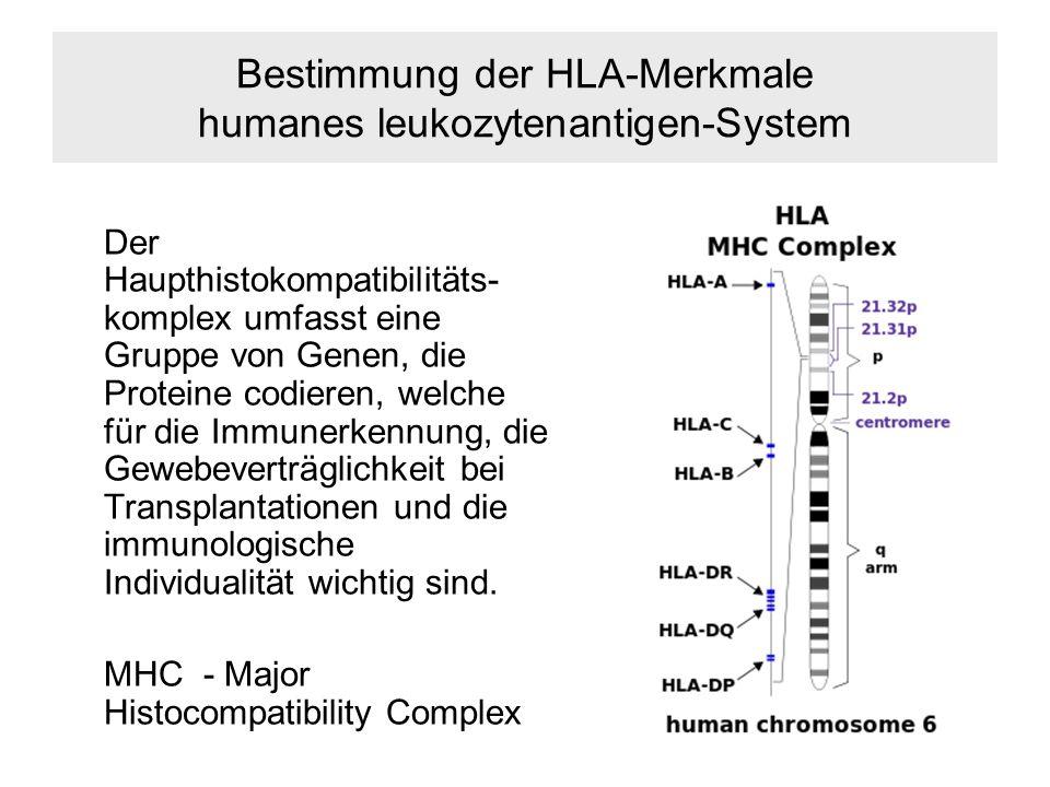 Bestimmung der HLA-Merkmale humanes leukozytenantigen-System Der Haupthistokompatibilitäts- komplex umfasst eine Gruppe von Genen, die Proteine codieren, welche für die Immunerkennung, die Gewebeverträglichkeit bei Transplantationen und die immunologische Individualität wichtig sind.