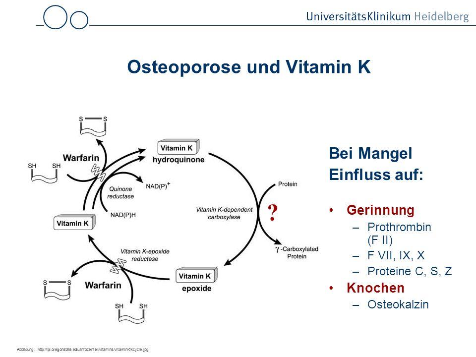 Osteoporose und Vitamin K Bei Mangel Einfluss auf: Gerinnung –Prothrombin (F II) –F VII, IX, X –Proteine C, S, Z Knochen –Osteokalzin Abbildung: http://lpi.oregonstate.edu/infocenter/vitamins/vitaminK/kcycle.jpg ?