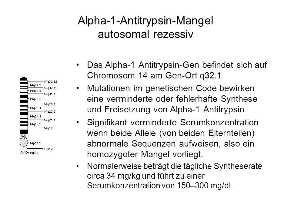 Alpha-1-Antitrypsin-Mangel autosomal rezessiv Das Alpha-1 Antitrypsin-Gen befindet sich auf Chromosom 14 am Gen-Ort q32.1 Mutationen im genetischen Code bewirken eine verminderte oder fehlerhafte Synthese und Freisetzung von Alpha-1 Antitrypsin Signifikant verminderte Serumkonzentration wenn beide Allele (von beiden Elternteilen) abnormale Sequenzen aufweisen, also ein homozygoter Mangel vorliegt.