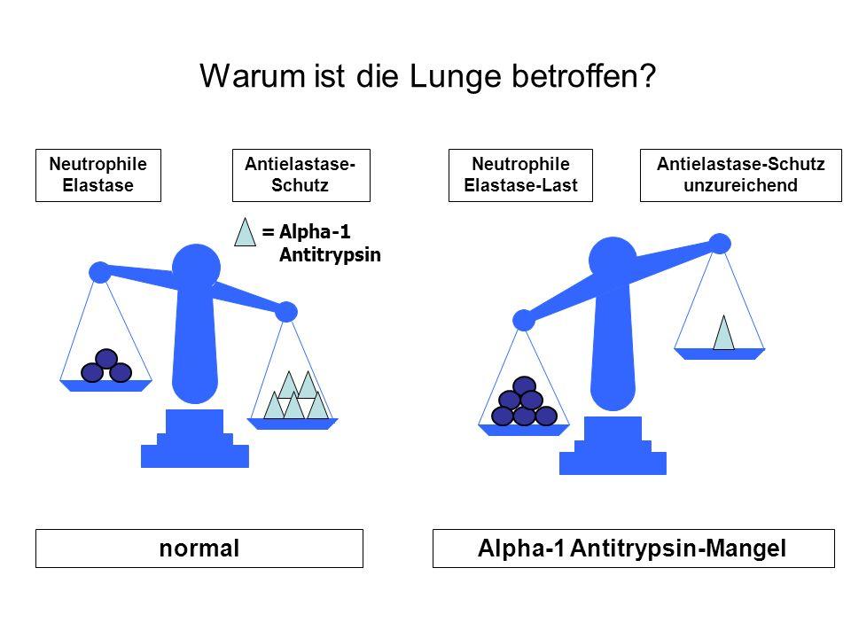 Warum ist die Lunge betroffen? Neutrophile Elastase Antielastase- Schutz Neutrophile Elastase-Last Antielastase-Schutz unzureichend normalAlpha-1 Anti