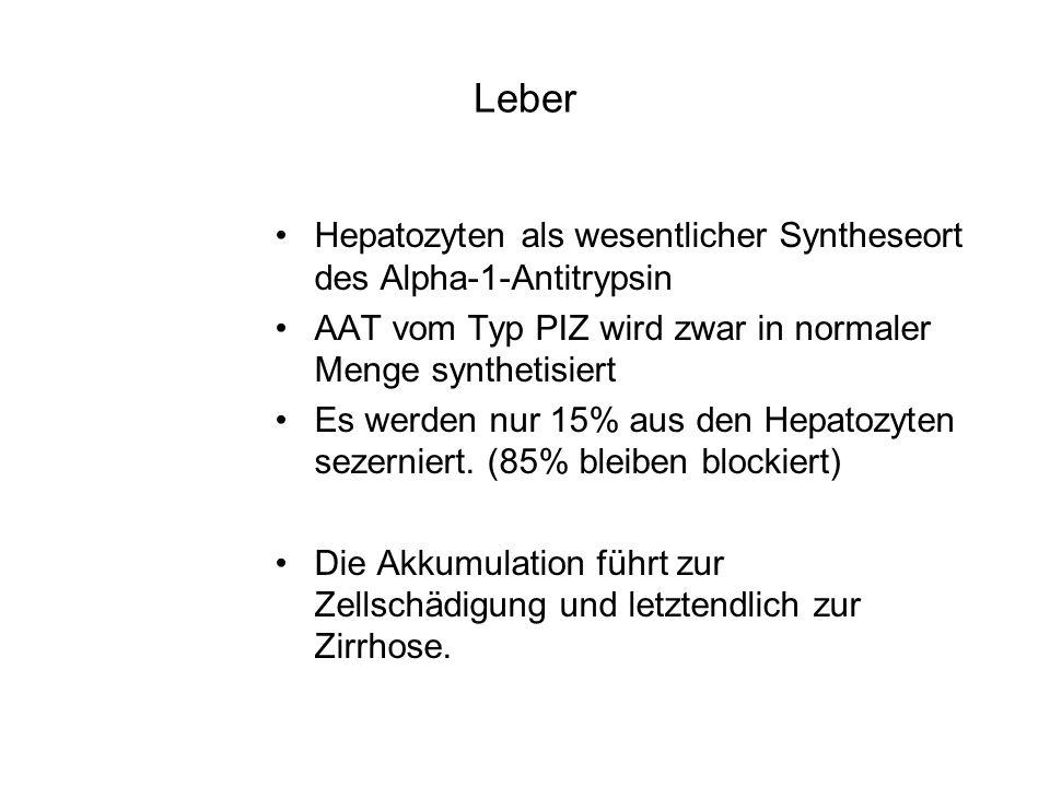 Leber Hepatozyten als wesentlicher Syntheseort des Alpha-1-Antitrypsin AAT vom Typ PIZ wird zwar in normaler Menge synthetisiert Es werden nur 15% aus den Hepatozyten sezerniert.