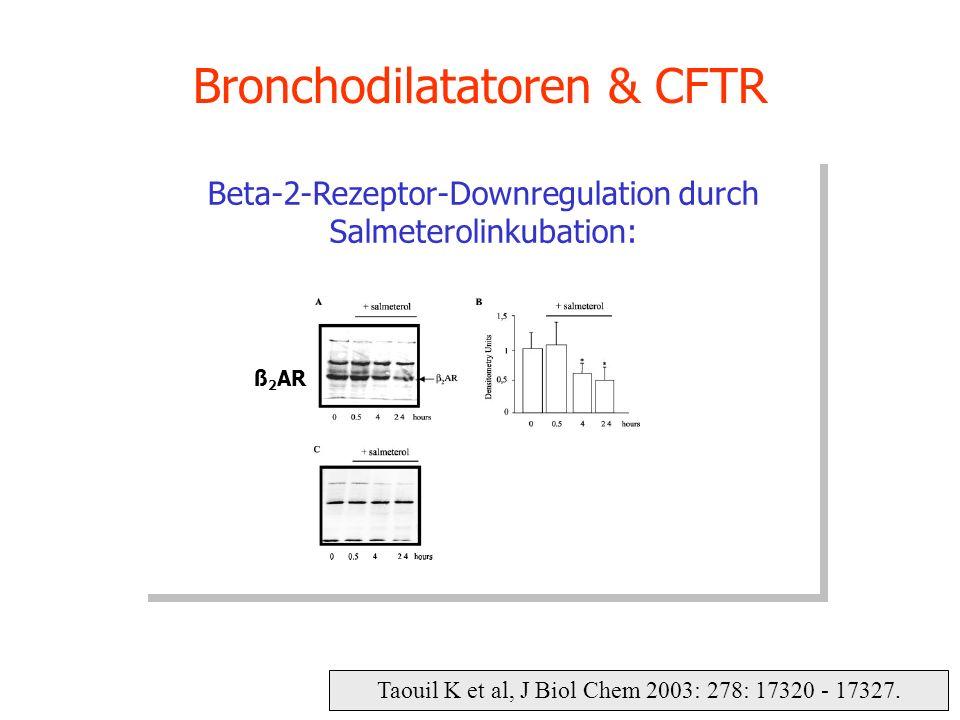 Taouil K et al, J Biol Chem 2003: 278: 17320 - 17327. Bronchodilatatoren & CFTR Beta-2-Rezeptor-Downregulation durch Salmeterolinkubation: ß 2 AR