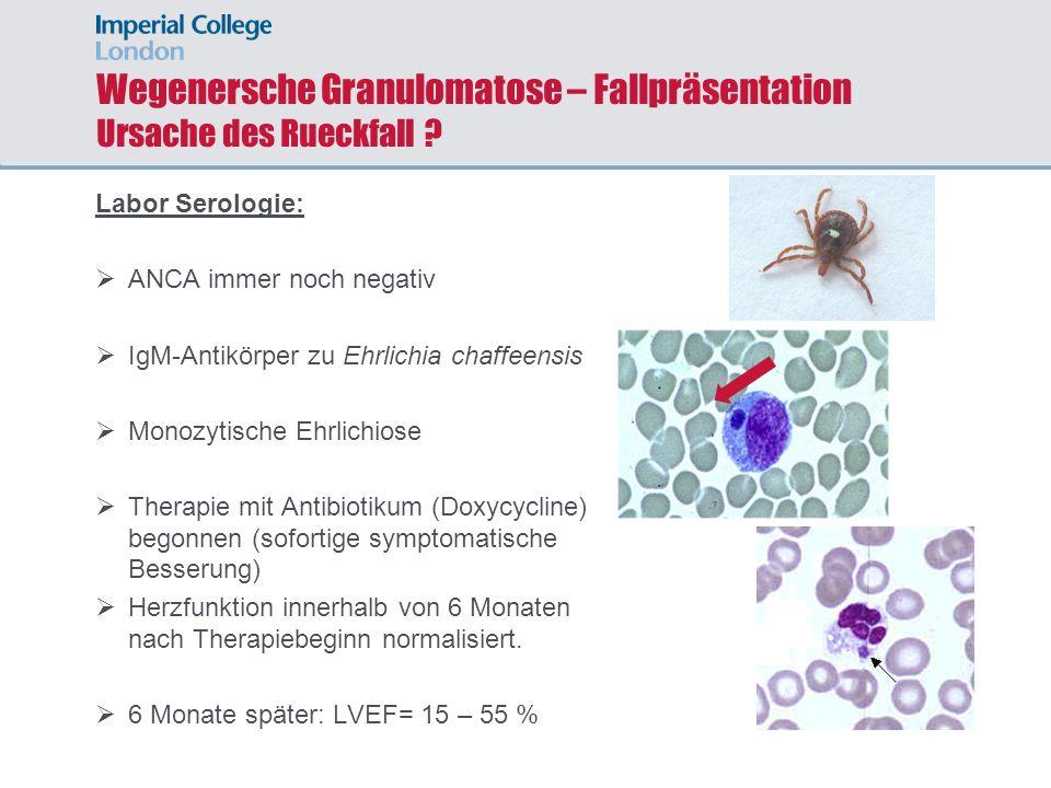 Wegenersche Granulomatose – Fallpräsentation Ursache des Rueckfall ? Labor Serologie: ANCA immer noch negativ IgM-Antikörper zu Ehrlichia chaffeensis