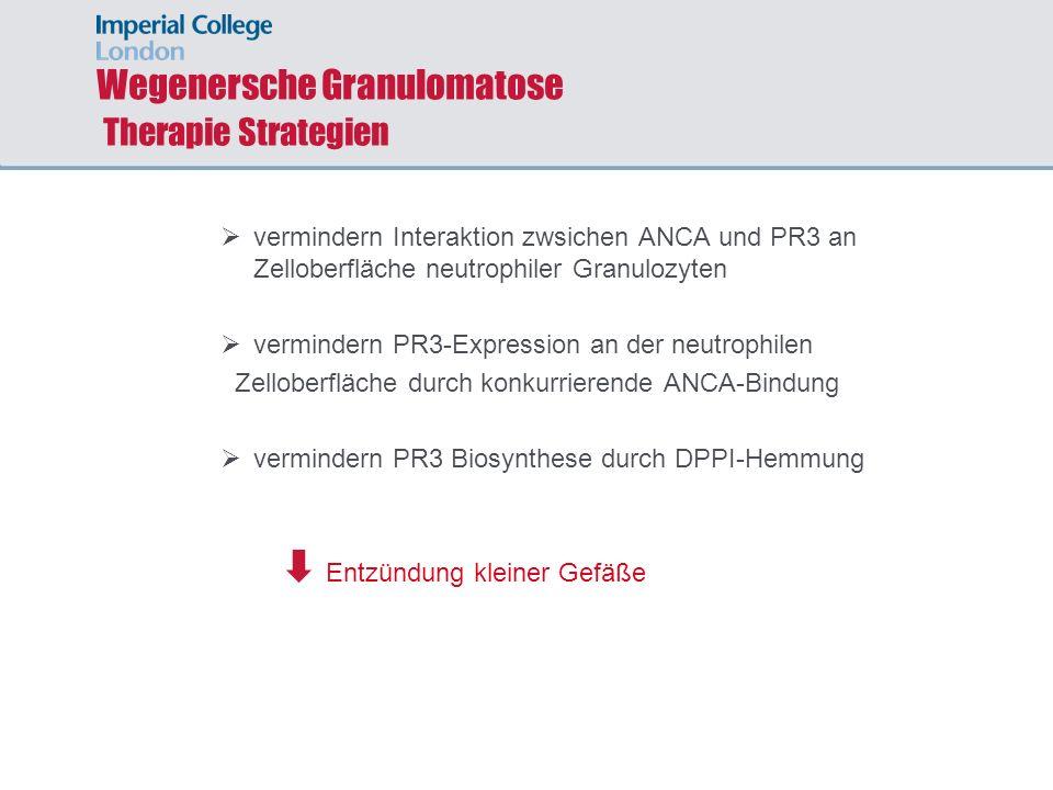 Wegenersche Granulomatose Therapie Strategien vermindern Interaktion zwsichen ANCA und PR3 an Zelloberfläche neutrophiler Granulozyten vermindern PR3-