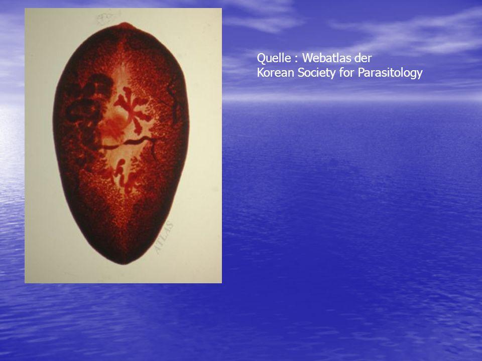 Quelle : Webatlas der Korean Society for Parasitology