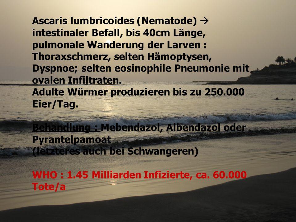 Ascaris lumbricoides (Nematode) intestinaler Befall, bis 40cm Länge, pulmonale Wanderung der Larven : Thoraxschmerz, selten Hämoptysen, Dyspnoe; selte