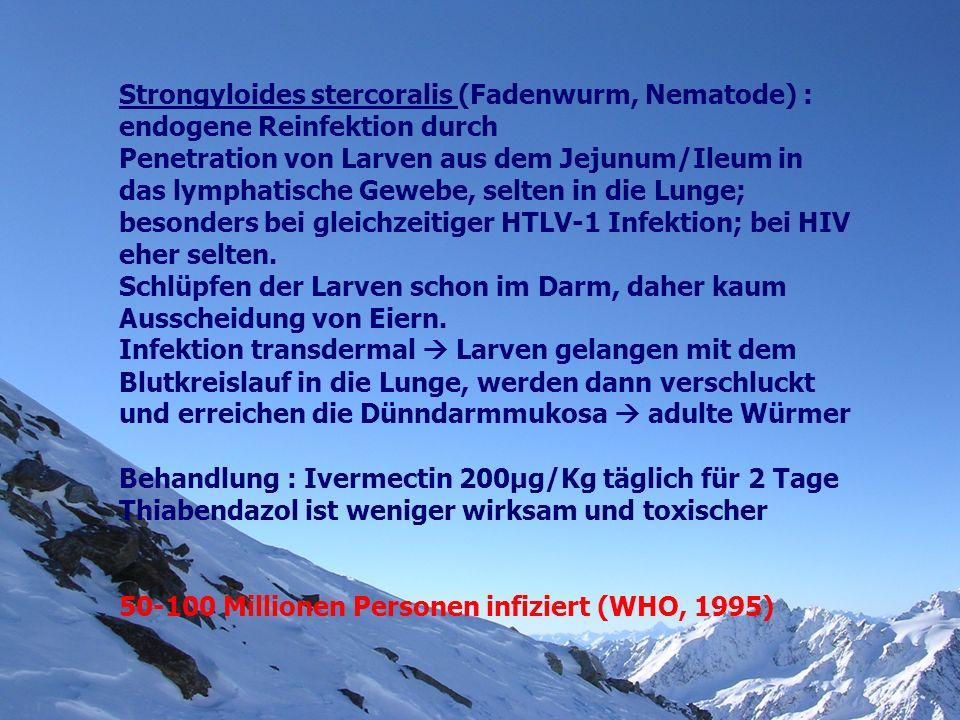 Strongyloides stercoralis (Fadenwurm, Nematode) : endogene Reinfektion durch Penetration von Larven aus dem Jejunum/Ileum in das lymphatische Gewebe,