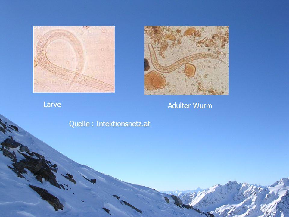 Larve Adulter Wurm Quelle : Infektionsnetz.at