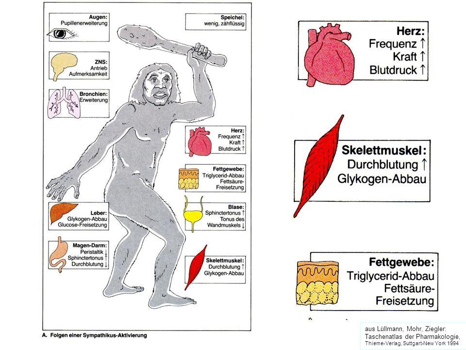 aus Lüllmann, Mohr, Ziegler: Taschenatlas der Pharmakologie, Thieme-Verlag, Suttgart-New York 1994