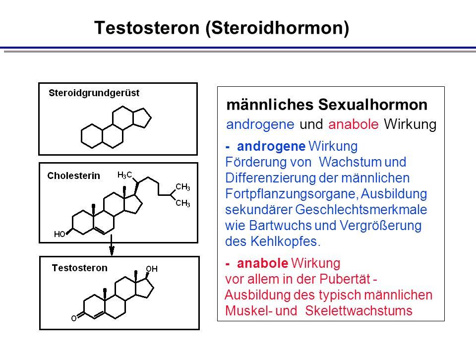 Testosteron (Steroidhormon) männliches Sexualhormon androgene und anabole Wirkung - androgene Wirkung Förderung von Wachstum und Differenzierung der männlichen Fortpflanzungsorgane, Ausbildung sekundärer Geschlechtsmerkmale wie Bartwuchs und Vergrößerung des Kehlkopfes.