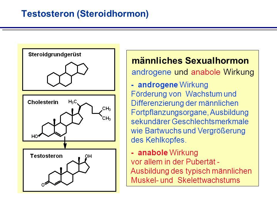 Testosteron (Steroidhormon) männliches Sexualhormon androgene und anabole Wirkung - androgene Wirkung Förderung von Wachstum und Differenzierung der m