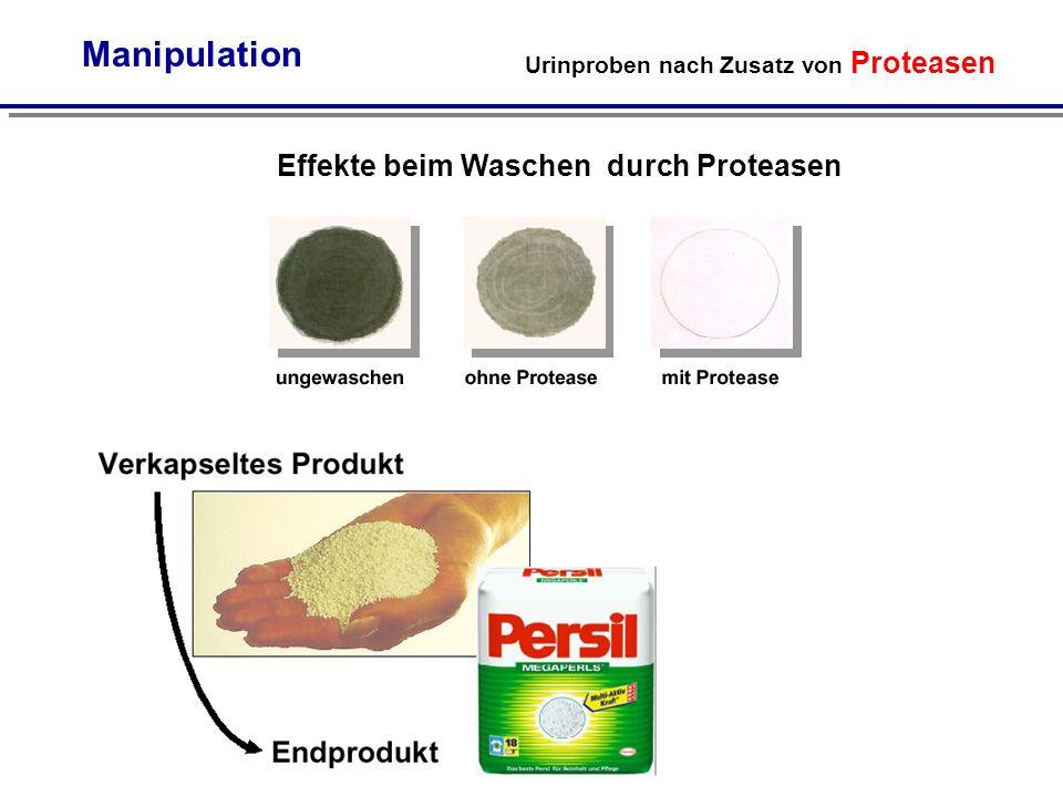 Urinproben nach Zusatz von Proteasen Manipulation Effekte beim Waschen durch Proteasen