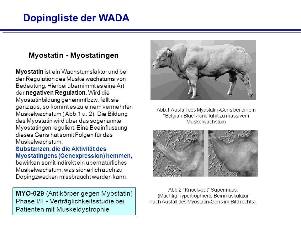 Myostatin - Myostatingen Myostatin ist ein Wachstumsfaktor und bei der Regulation des Muskelwachstums von Bedeutung. Hierbei übernimmt es eine Art der
