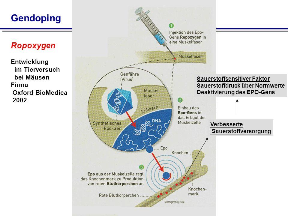 Gendoping Verbesserte Sauerstoffversorgung Sauerstoffsensitiver Faktor Sauerstoffdruck über Normwerte Deaktivierung des EPO-Gens Ropoxygen Entwicklung