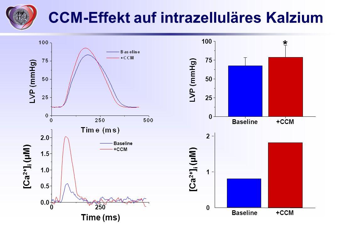 CCM-Effekt auf intrazelluläres Kalzium Baseline+CCM 0 25 50 75 100 * 0250 0.0 0.5 1.0 1.5 2.0 Baseline +CCM Time (ms) Baseline+CCM [Ca 2+ ] i (μM) 0 1