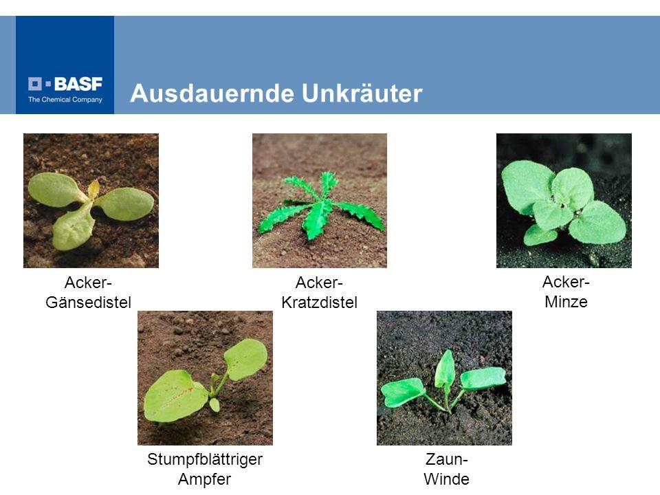 Stumpfblättriger Ampfer Acker- Gänsedistel Acker- Kratzdistel Acker- Minze Zaun- Winde Ausdauernde Unkräuter