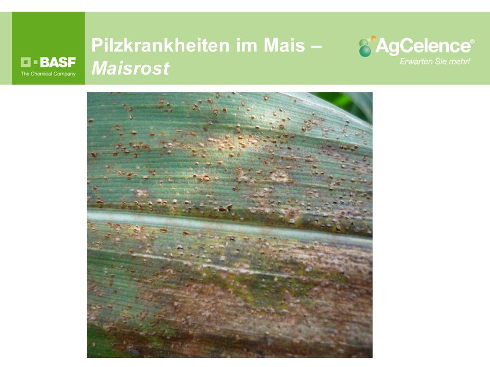 Pilzkrankheiten im Mais – Maisrost