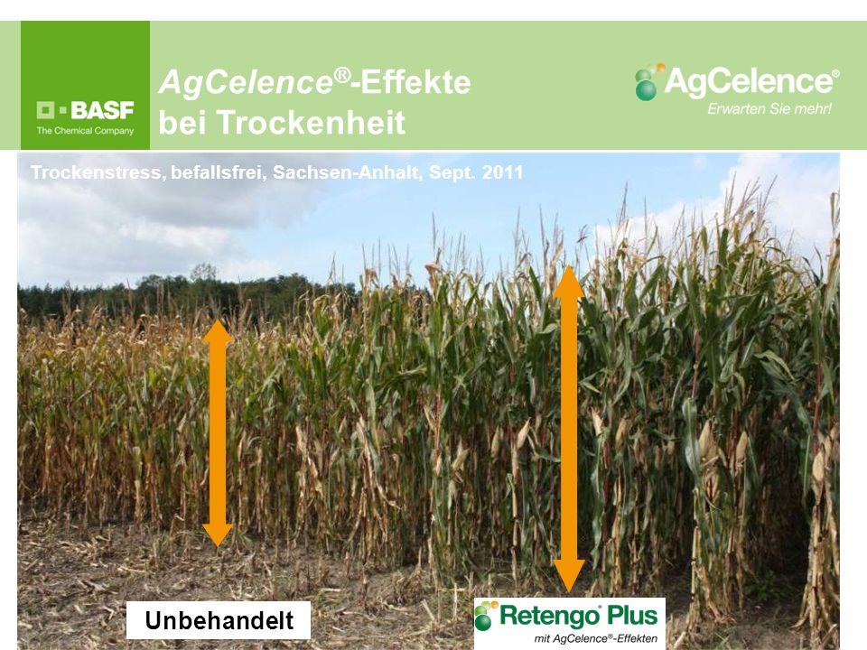 AgCelence ® -Effekte bei Trockenheit Trockenstress, befallsfrei, Sachsen-Anhalt, Sept. 2011 Unbehandelt