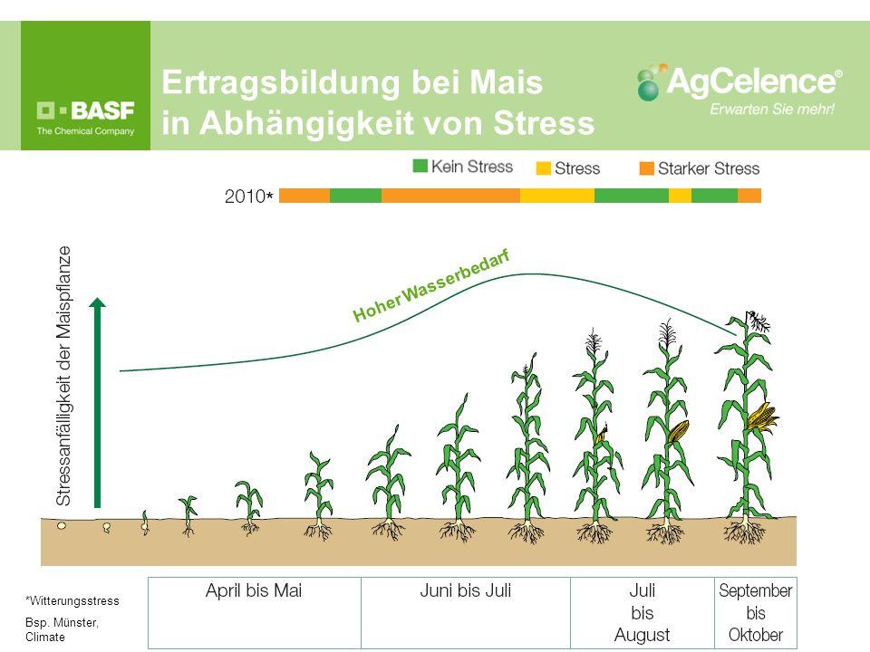 Ertragsbildung bei Mais in Abhängigkeit von Stress *Witterungsstress Bsp. Münster, Climate * Hoher Wasserbedarf