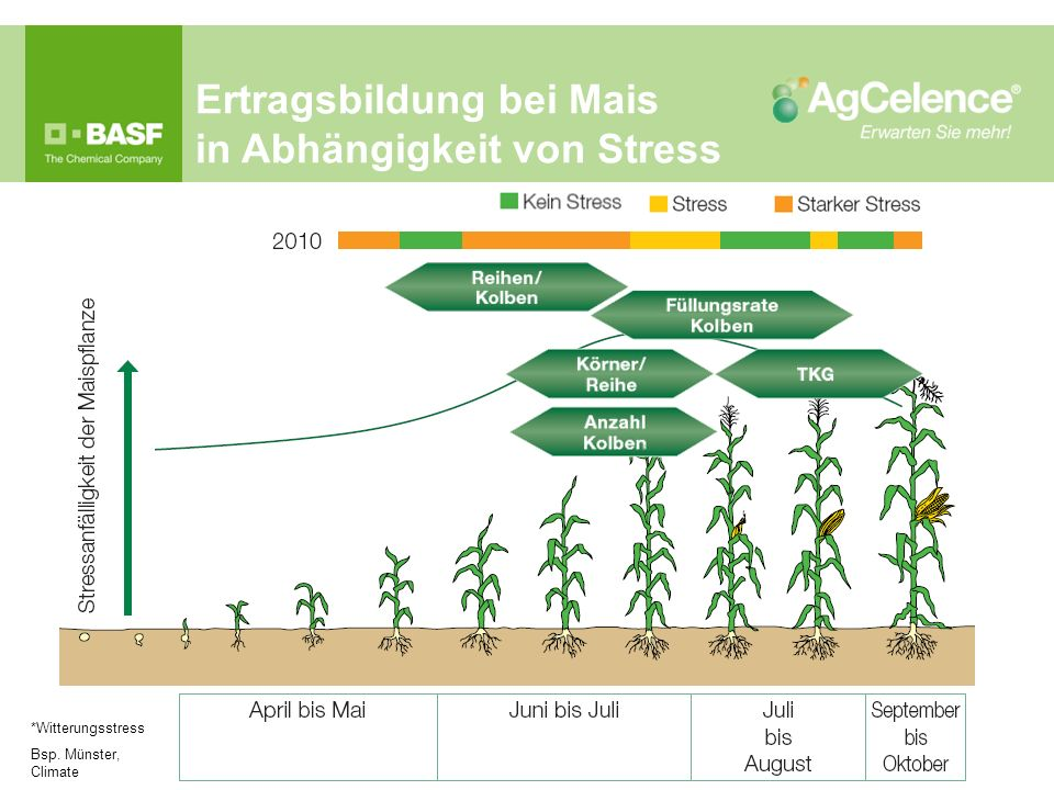 Ertragsbildung bei Mais in Abhängigkeit von Stress *Witterungsstress Bsp. Münster, Climate