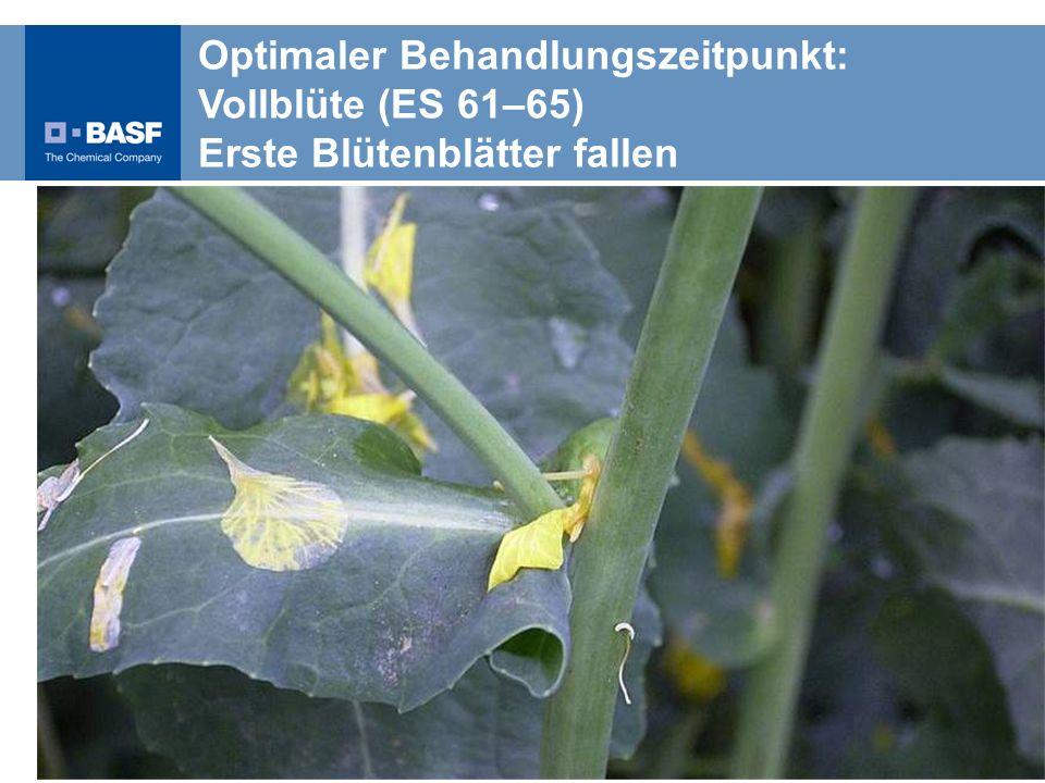 Optimaler Behandlungszeitpunkt: Vollblüte (ES 61–65) Erste Blütenblätter fallen