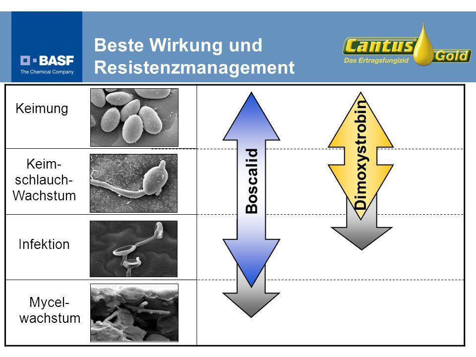 Keimung Keim- schlauch- Wachstum Infektion Mycel- wachstum Boscalid Dimoxystrobin Beste Wirkung und Resistenzmanagement